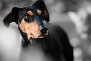 Владельцы собак живут дольше, - заявили учёные