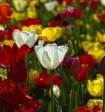 Россельхознадзор перед 8 марта сжег 5 тысяч цветов