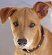 Собаки манипулируют людьми ради выгоды, выяснили ученые
