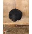 В Приморье в сарае обнаружили голодного гималайского медвежонка