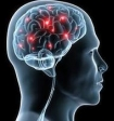 Мозг альтруистов-храбрецов устроен особым образом