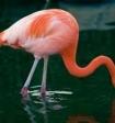 Дети до смерти запинали розового фламинго в зоопарке
