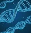 Учёные: у россиян лишь 16% генов от коренных русских