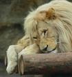 Крымские  налоговики вручили Зубкову протокол о закрытии зоопарка «Сказка» в Ялте