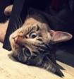 Косоглазый кот стал звездой интернета