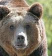 Полиция Таганрога ищет мужчину, выгуливавшего во дворе медведя