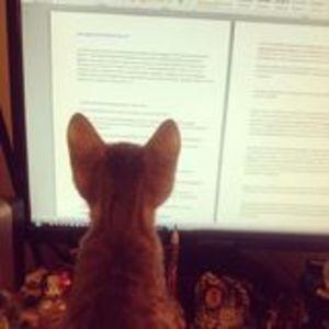Специалисты из США объяснили, как на самом деле кошки относятся к людям