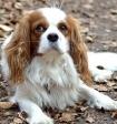 Ученые выяснили, какие чувства может испытывать собака