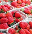 Специалистами названа самая опасная ягода в мире