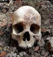 Под Курском семья обнаружила массовое захоронение в собственном огороде