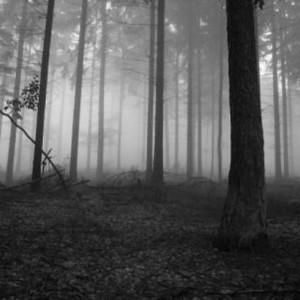 Соцсети озадачены фотографией увешанного женскими трусами дерева в калужском лесу