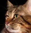 Японский губернатор рассказал о подаренном Путиным коте