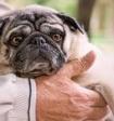 Учёные доказали, что собаки умеют читать мысли