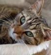 Учёные доказали: мурлыкающие котики продлевают жизнь