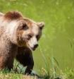 Велосипедист снял на видео, как медведь гонится за его другом