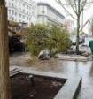 Власти Москвы объяснили, почему не распускаются посаженные в прошлом году деревья