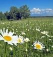 Главный эксперт по вопросам климата рассказал, каким будет лето в России