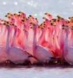 Учёные рассказали, зачем фламинго стоят на одной ноге