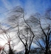В Москве вечером ожидается гроза с мощными порывами ветра