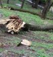 В Москве объявили экстренное предупреждение об ухудшении погоды