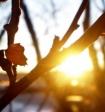 Летняя жара может прийти в московский регион уже на следующей неделе