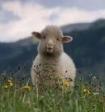 Разработана программа, распознающая чувства животных по их мимике