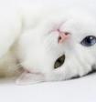 Поедающий круасан кот стал звездой сети