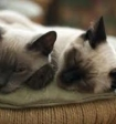 Госдума ограничит количество животных в квартире
