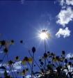В конце недели в московском регионе ожидаются дни настоящего лета