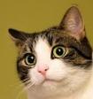 Учёные раскрыли тайну происхождения домашних кошек