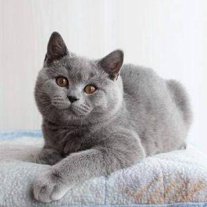 Злобный кот-ревнивец покорил соцсети страшным взглядом рядом с новым котенком
