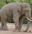 Купание слонов на пляже Челябинска собрало внушительную толпу