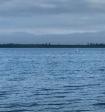На Ямале завёлся свой монстр в озере