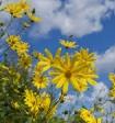 Синоптики: лета уже не будет