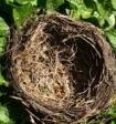 Учёные рассказали, зачем птицы собирают окурки
