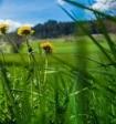 Синоптики: 7 июля будет самым холодным днём месяца