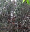 Синоптики предупреждают о дожде и граде