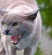 Раскрыт секрет злобных котиков