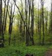 Пропавшая российская актриса была найдена мертвой в лесу