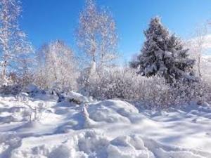 Синоптики рассказали, какой будет предстоящая зима