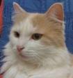 В Петербурге «заминировали» «Республику кошек»