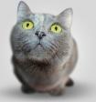 В Госдуму внесён законопроект о наказании за жестокое обращение с животными