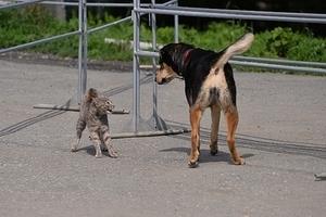 Кошек, собак, кроликов и рыб поставят на учёт