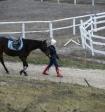 В Петербурге лошадь откусила парню нос, а в Волгограде