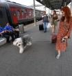 Судя по сложностям контракта об отлове животных в Уфе, в других городах тоже все будет непросто