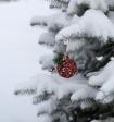 Главной новогодней ели в Архангельске радовать горожан посчастливилось недолго