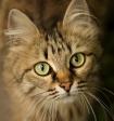 Кот спас жизнь годовалой малышке, просигналив о беде