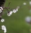 Весна, и уже без вопросов: синоптик заявил об одинаковых тепературах на обширной территории РФ