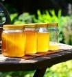 Необычный мед признали одним из самых полезных