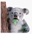 ICQ запустила открытую платформу для стикеров